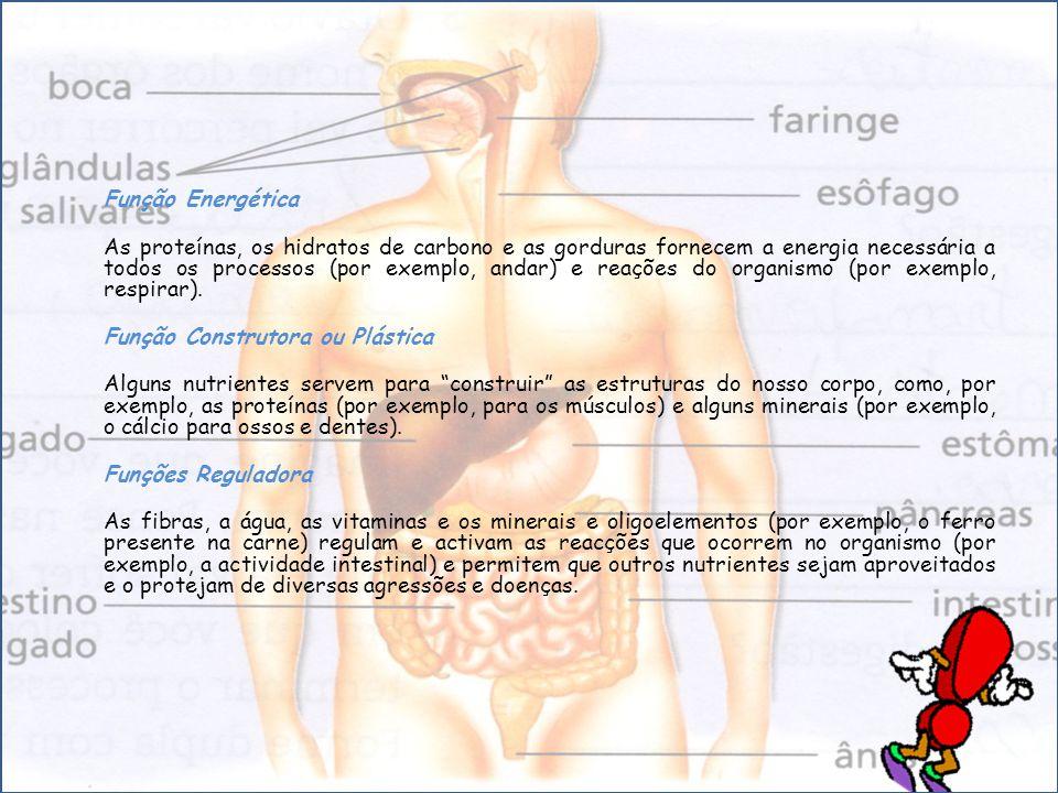 Função Energética As proteínas, os hidratos de carbono e as gorduras fornecem a energia necessária a todos os processos (por exemplo, andar) e reações do organismo (por exemplo, respirar).