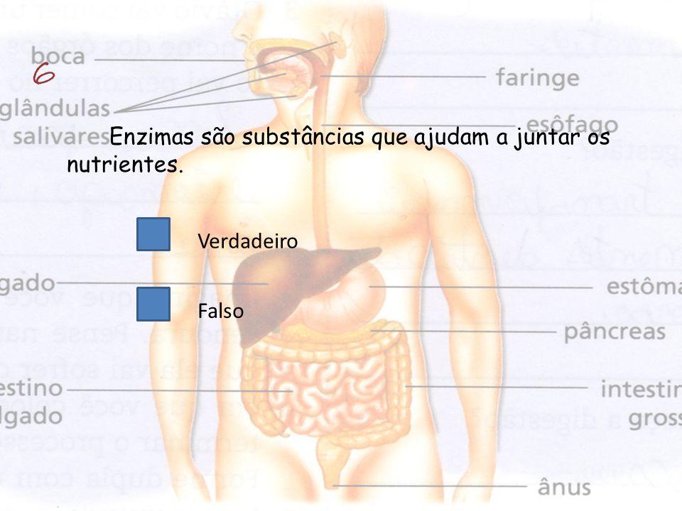 6 Enzimas são substâncias que ajudam a juntar os nutrientes.