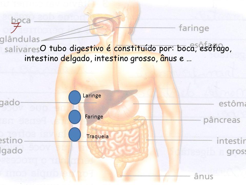 7 O tubo digestivo é constituído por: boca, esófago, intestino delgado, intestino grosso, ânus e … Laringe.