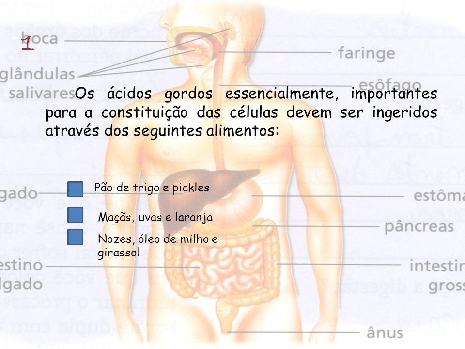 1 Os ácidos gordos essencialmente, importantes para a constituição das células devem ser ingeridos através dos seguintes alimentos:
