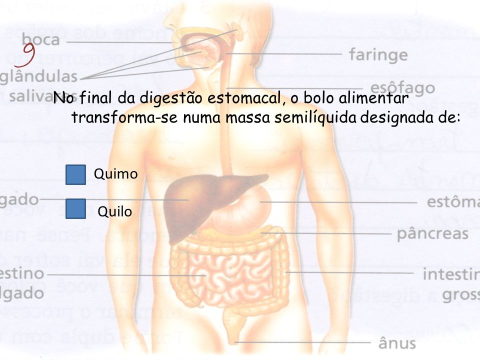 9 No final da digestão estomacal, o bolo alimentar transforma-se numa massa semilíquida designada de: