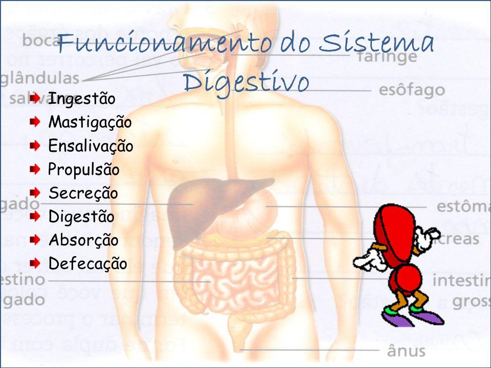 Funcionamento do Sistema Digestivo