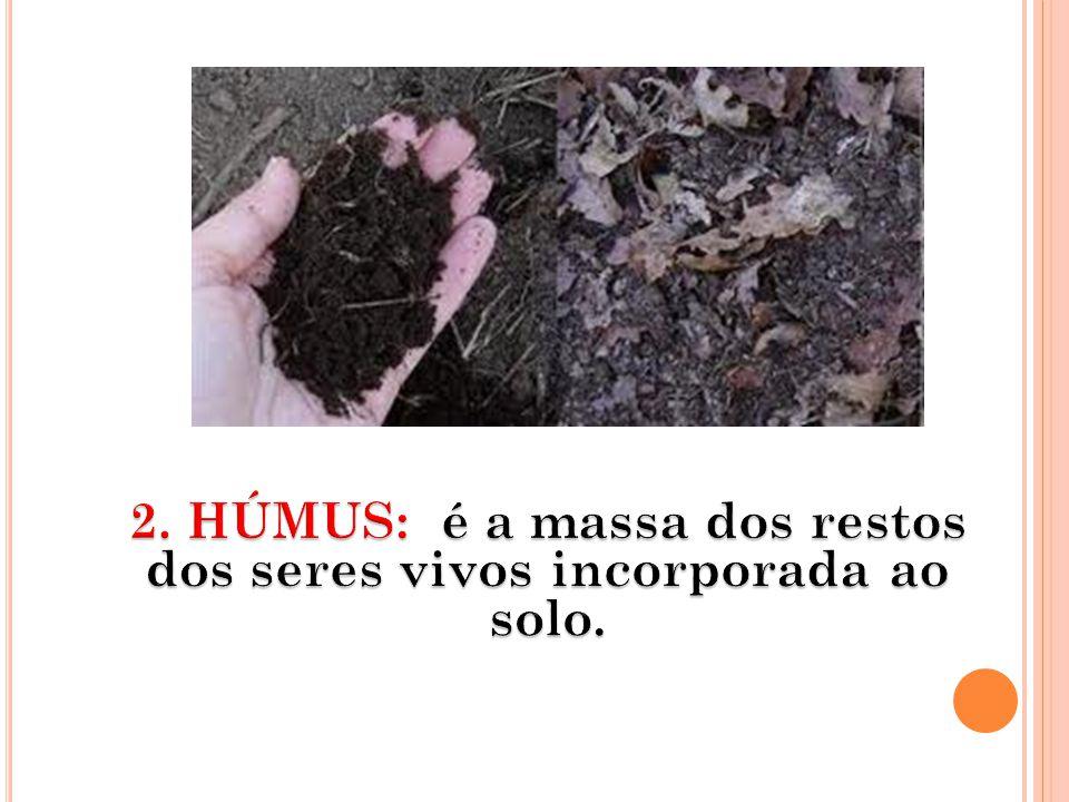 2. HÚMUS: é a massa dos restos dos seres vivos incorporada ao solo.