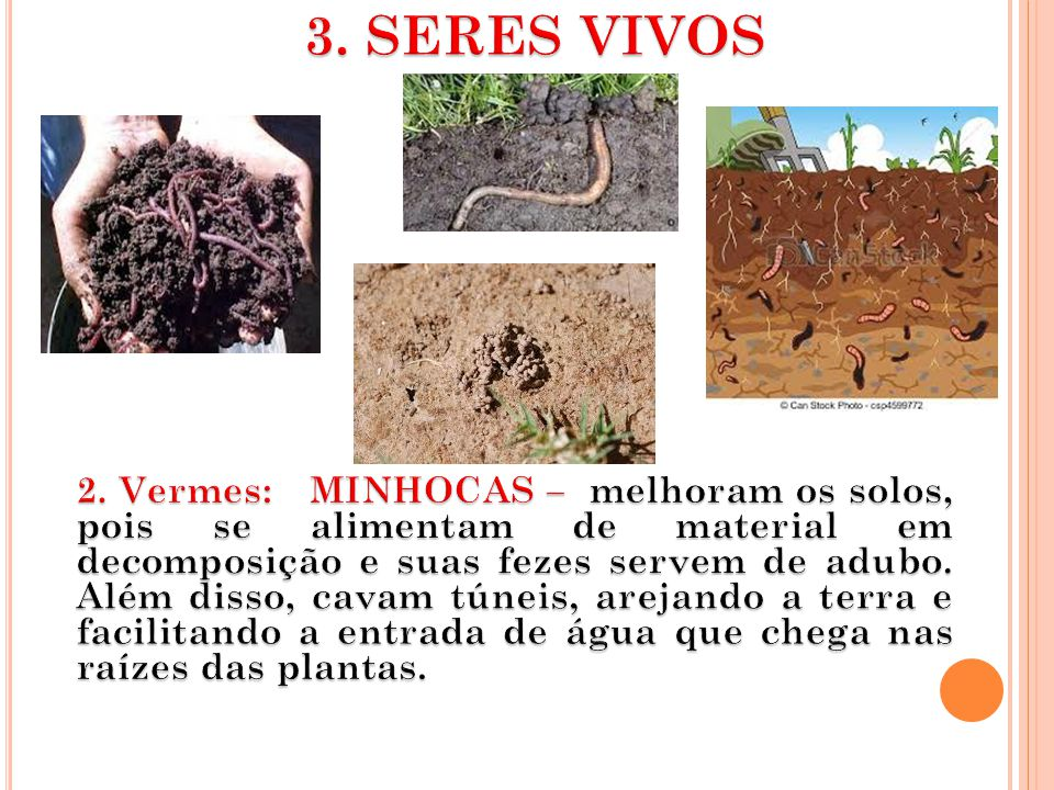 3. SERES VIVOS