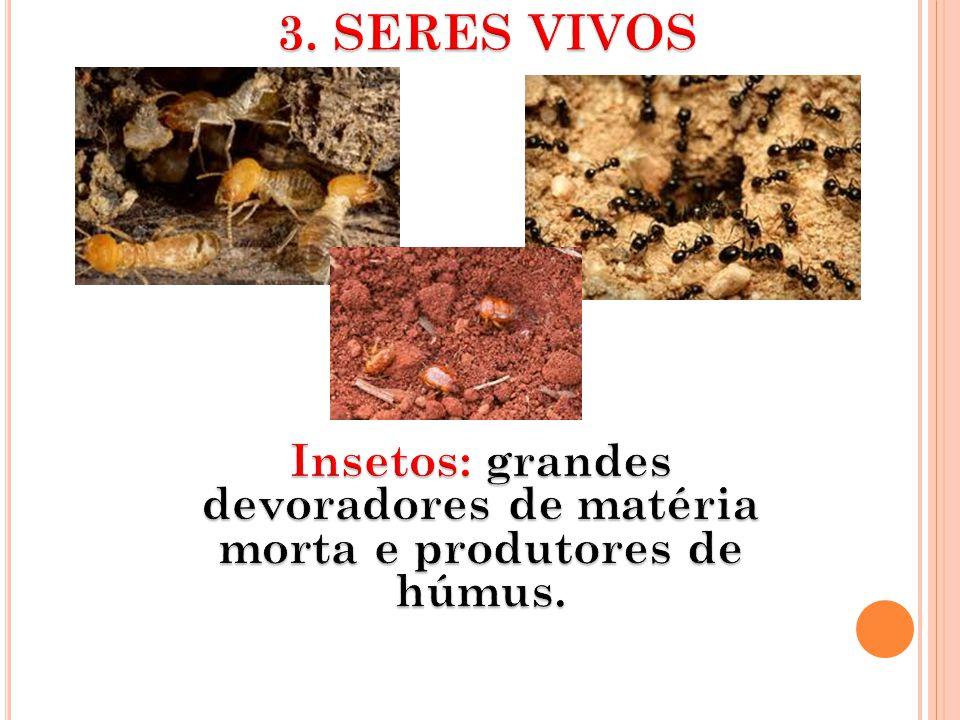 Insetos: grandes devoradores de matéria morta e produtores de húmus.
