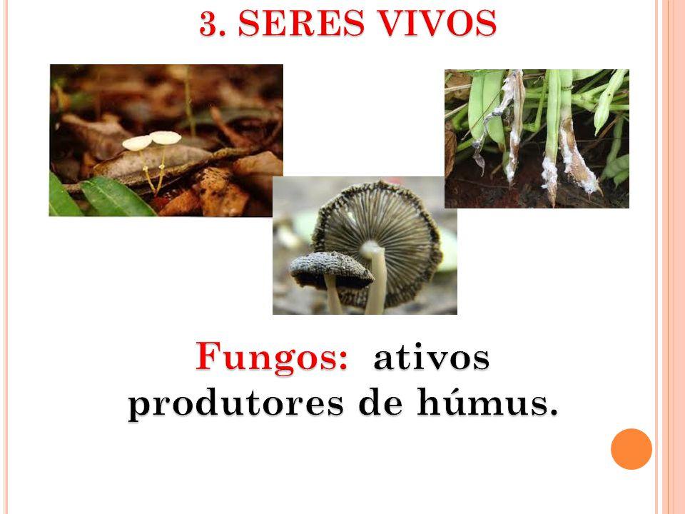 Fungos: ativos produtores de húmus.