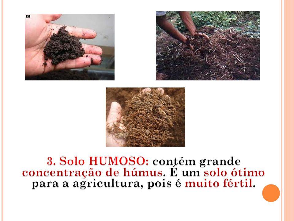 3. Solo HUMOSO: contém grande concentração de húmus