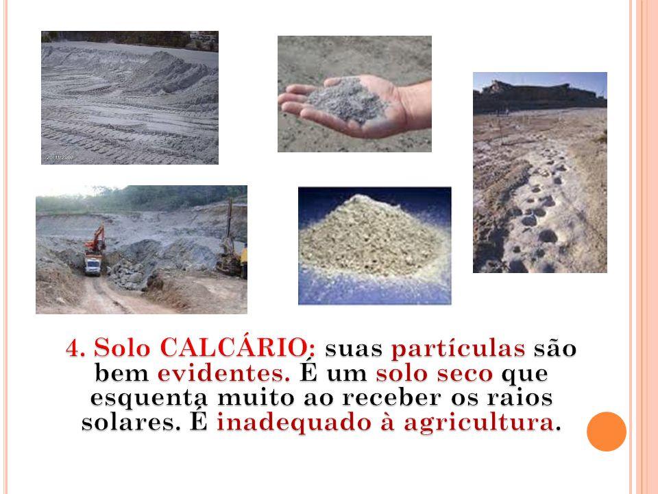 4. Solo CALCÁRIO: suas partículas são bem evidentes