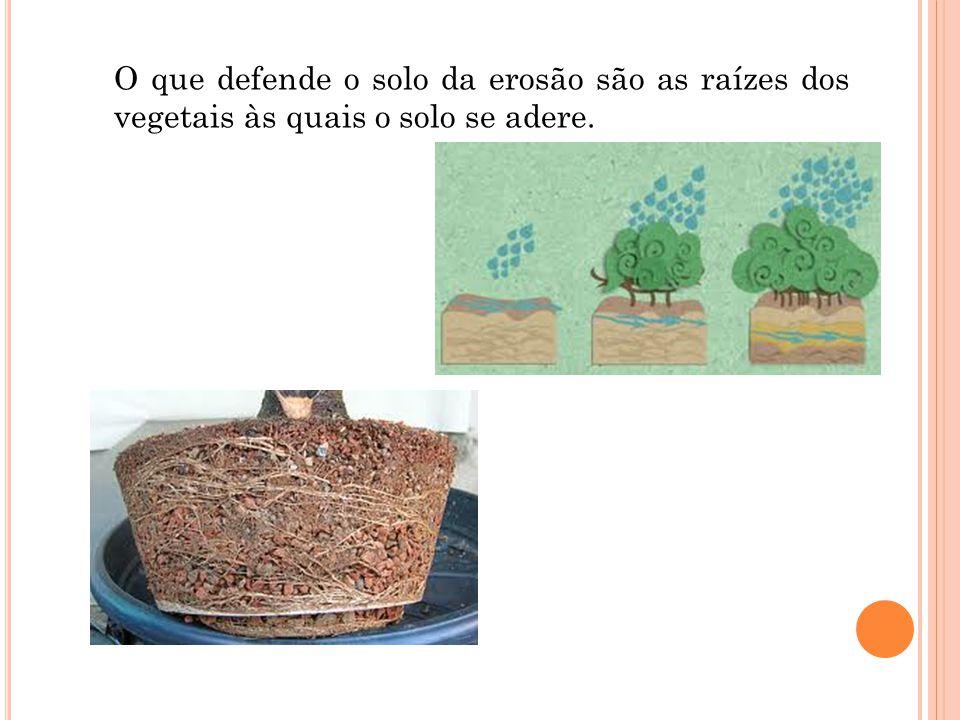 O que defende o solo da erosão são as raízes dos vegetais às quais o solo se adere.
