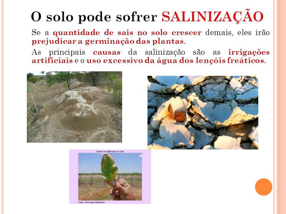 O solo pode sofrer SALINIZAÇÃO