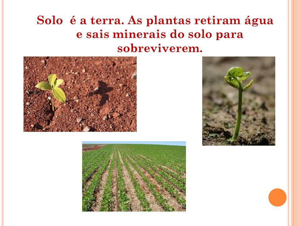Solo é a terra. As plantas retiram água e sais minerais do solo para sobreviverem.