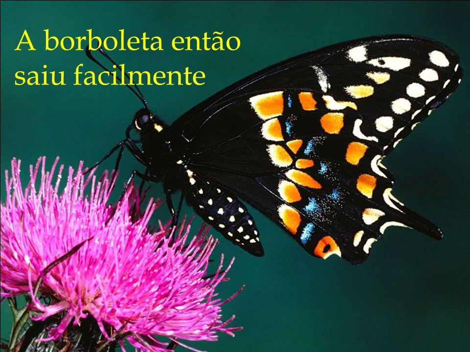 A borboleta então saiu facilmente