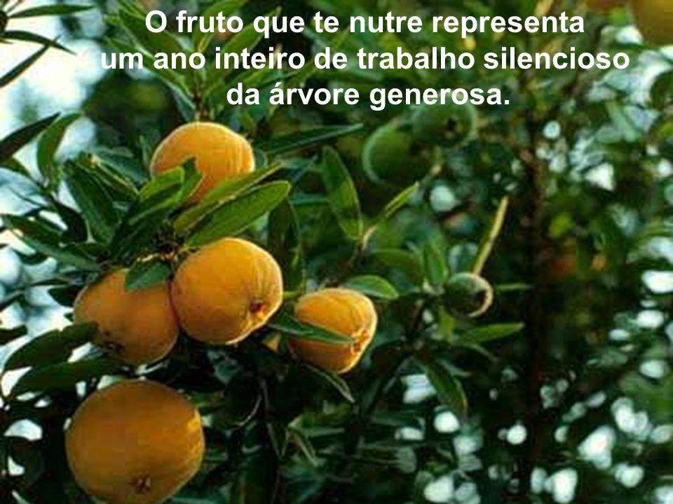 O fruto que te nutre representa um ano inteiro de trabalho silencioso