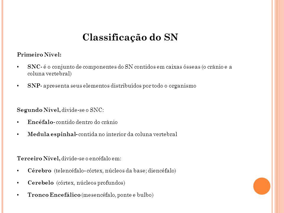 Classificação do SN Primeiro Nível: