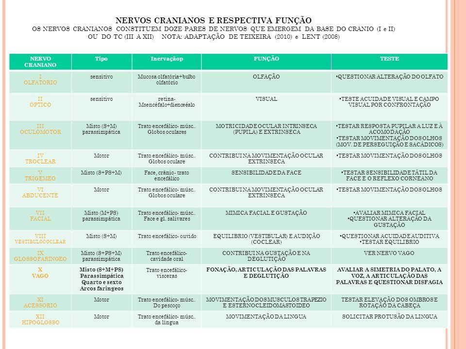 NERVOS CRANIANOS E RESPECTIVA FUNÇÃO OS NERVOS CRANIANOS CONSTITUEM DOZE PARES DE NERVOS QUE EMERGEM DA BASE DO CRANIO (I e II) OU DO TC (III A XII) NOTA: ADAPTAÇÃO DE TEIXEIRA (2010) e LENT (2008)