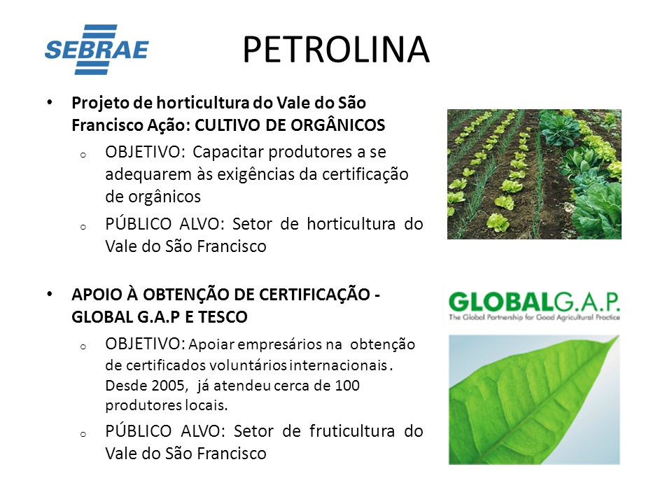 PETROLINA Projeto de horticultura do Vale do São Francisco Ação: CULTIVO DE ORGÂNICOS.