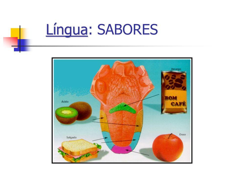 Língua: SABORES