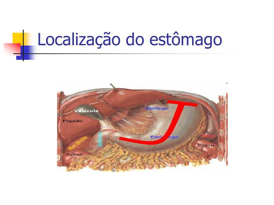 Localização do estômago