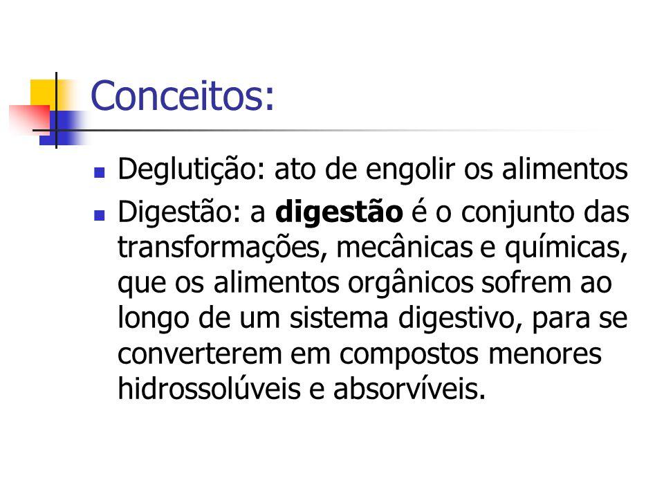Conceitos: Deglutição: ato de engolir os alimentos
