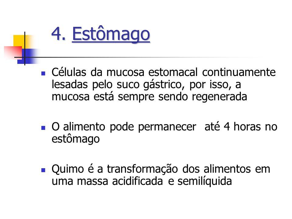 4. Estômago Células da mucosa estomacal continuamente lesadas pelo suco gástrico, por isso, a mucosa está sempre sendo regenerada.