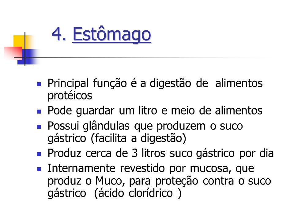 4. Estômago Principal função é a digestão de alimentos protéicos
