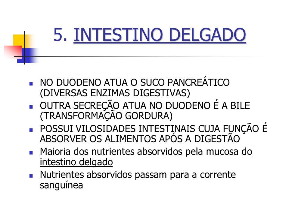 5. INTESTINO DELGADO NO DUODENO ATUA O SUCO PANCREÁTICO (DIVERSAS ENZIMAS DIGESTIVAS)