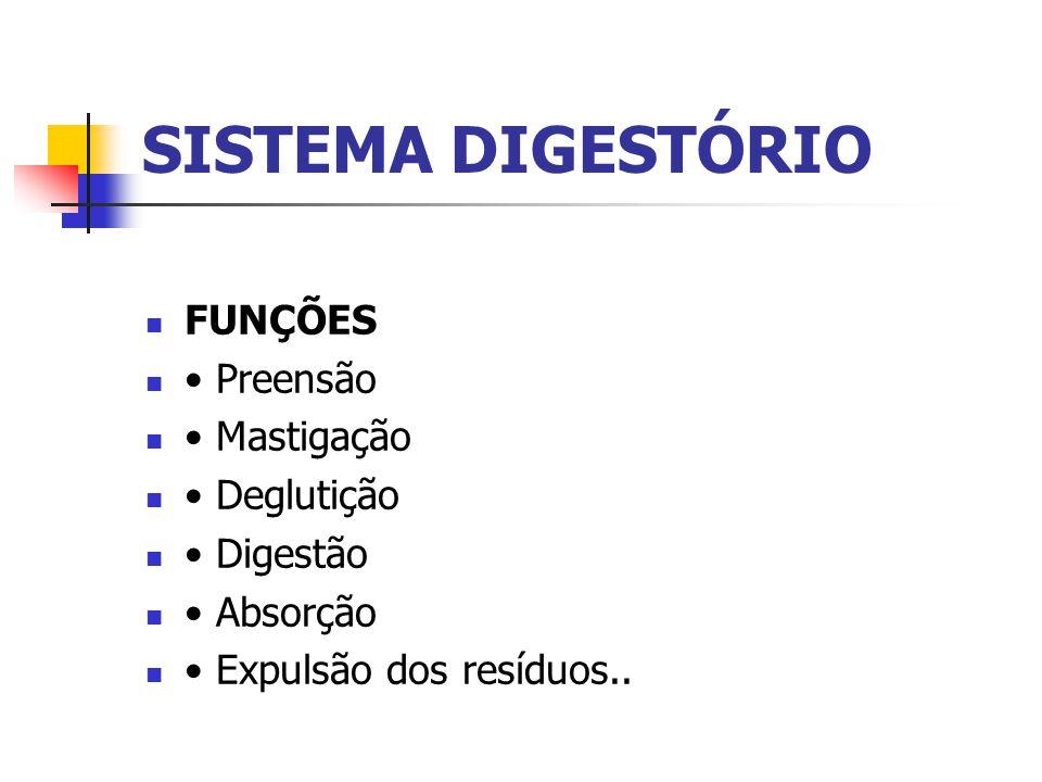 SISTEMA DIGESTÓRIO FUNÇÕES • Preensão • Mastigação • Deglutição