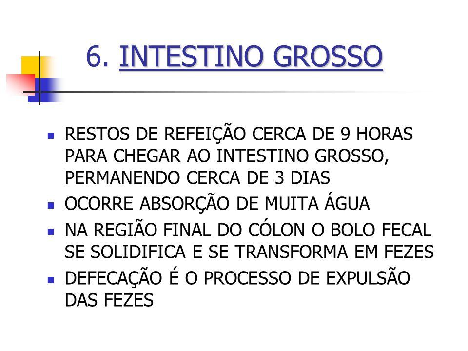 6. INTESTINO GROSSO RESTOS DE REFEIÇÃO CERCA DE 9 HORAS PARA CHEGAR AO INTESTINO GROSSO, PERMANENDO CERCA DE 3 DIAS.