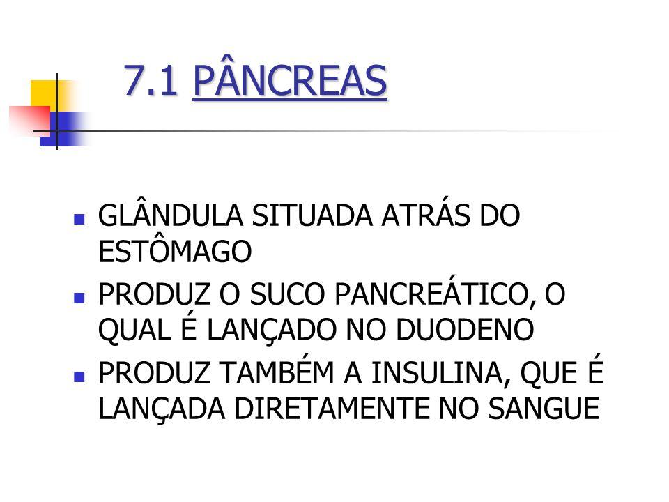 7.1 PÂNCREAS GLÂNDULA SITUADA ATRÁS DO ESTÔMAGO