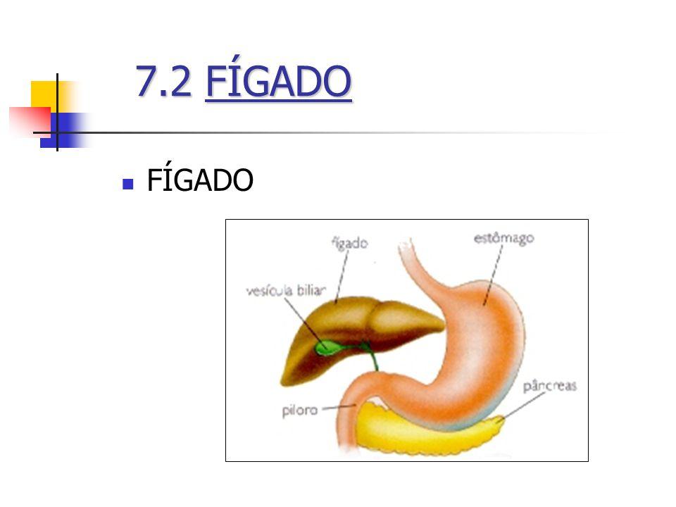 7.2 FÍGADO FÍGADO
