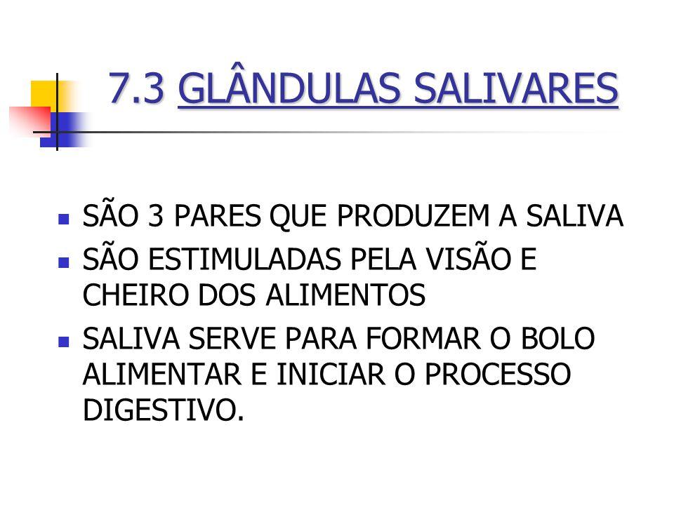 7.3 GLÂNDULAS SALIVARES SÃO 3 PARES QUE PRODUZEM A SALIVA