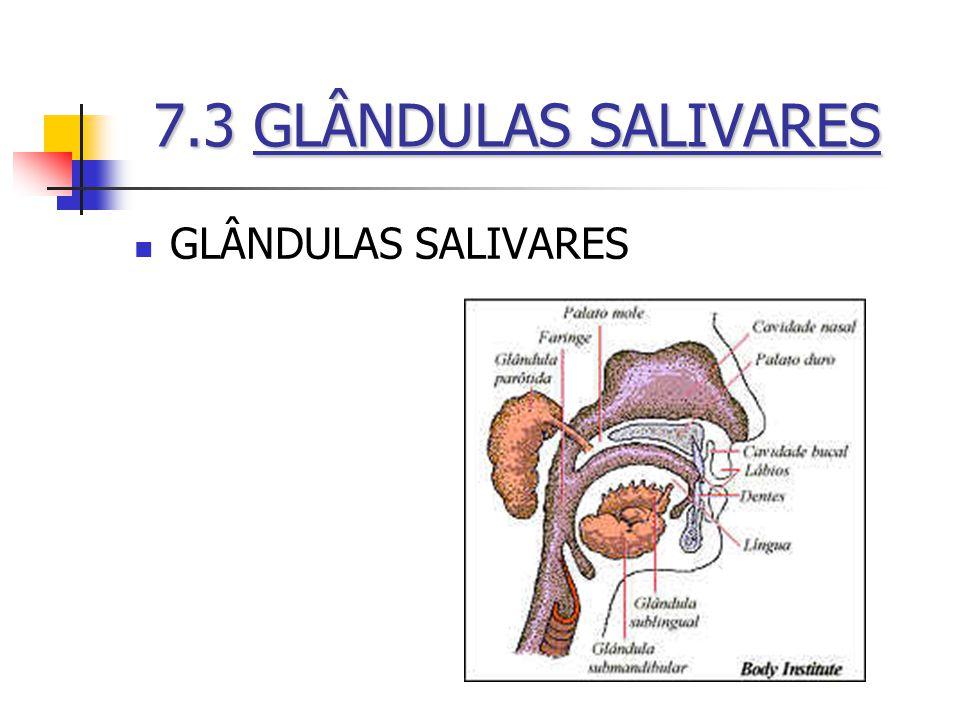 7.3 GLÂNDULAS SALIVARES GLÂNDULAS SALIVARES
