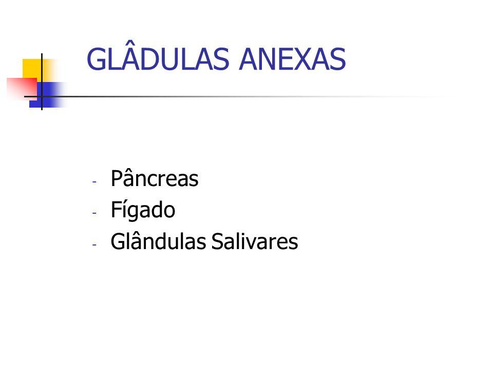 GLÂDULAS ANEXAS Pâncreas Fígado Glândulas Salivares