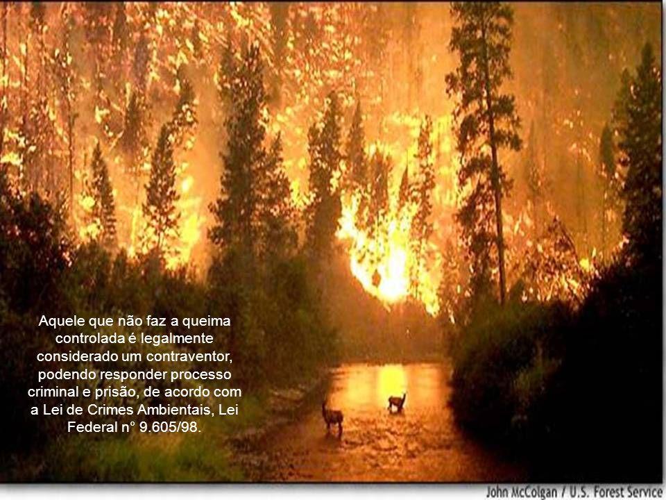 Aquele que não faz a queima controlada é legalmente considerado um contraventor, podendo responder processo criminal e prisão, de acordo com a Lei de Crimes Ambientais, Lei Federal n° 9.605/98.