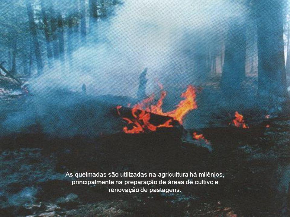 As queimadas são utilizadas na agricultura há milênios, principalmente na preparação de áreas de cultivo e renovação de pastagens.