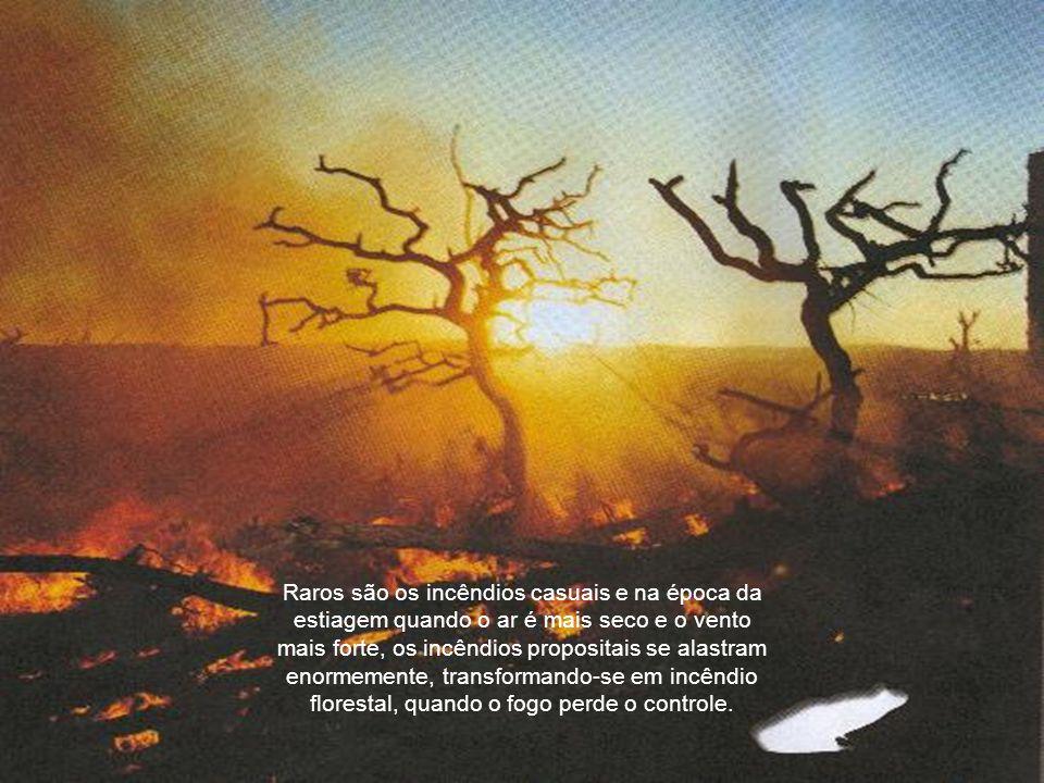 Raros são os incêndios casuais e na época da estiagem quando o ar é mais seco e o vento mais forte, os incêndios propositais se alastram enormemente, transformando-se em incêndio florestal, quando o fogo perde o controle.