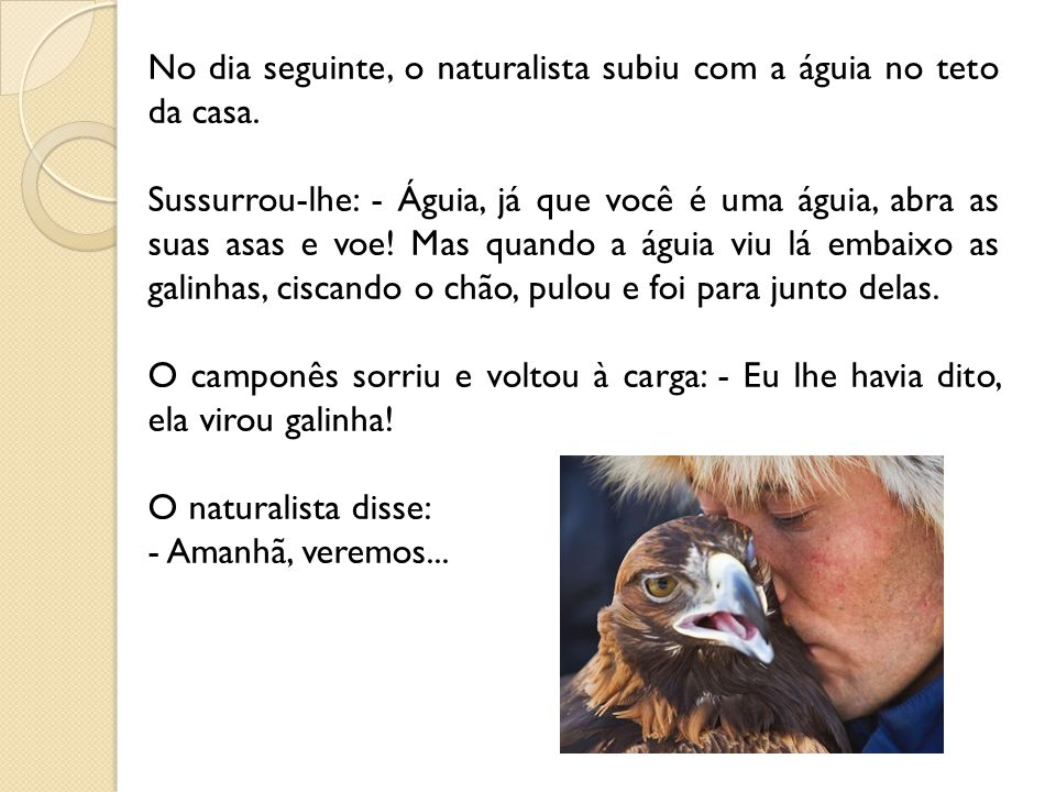 No dia seguinte, o naturalista subiu com a águia no teto da casa.