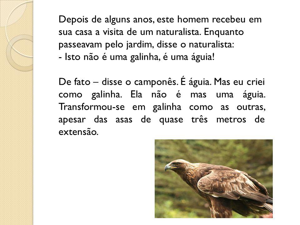Depois de alguns anos, este homem recebeu em sua casa a visita de um naturalista. Enquanto passeavam pelo jardim, disse o naturalista: - Isto não é uma galinha, é uma águia!