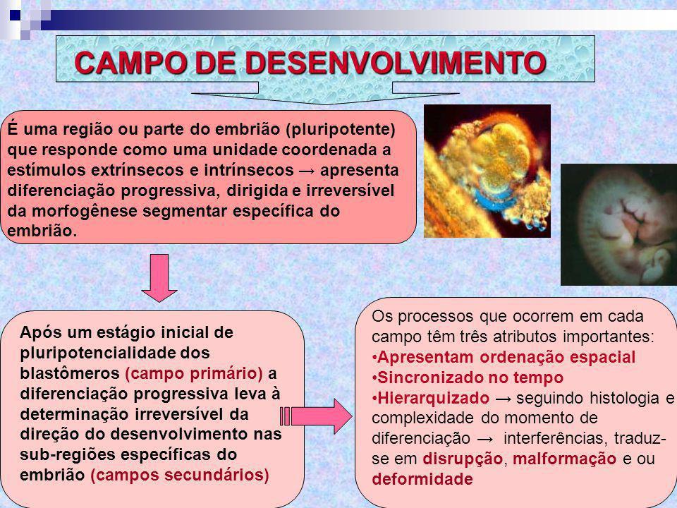CAMPO DE DESENVOLVIMENTO
