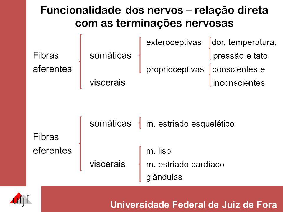 Funcionalidade dos nervos – relação direta com as terminações nervosas
