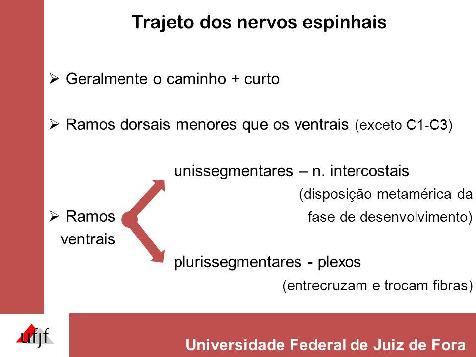 Trajeto dos nervos espinhais