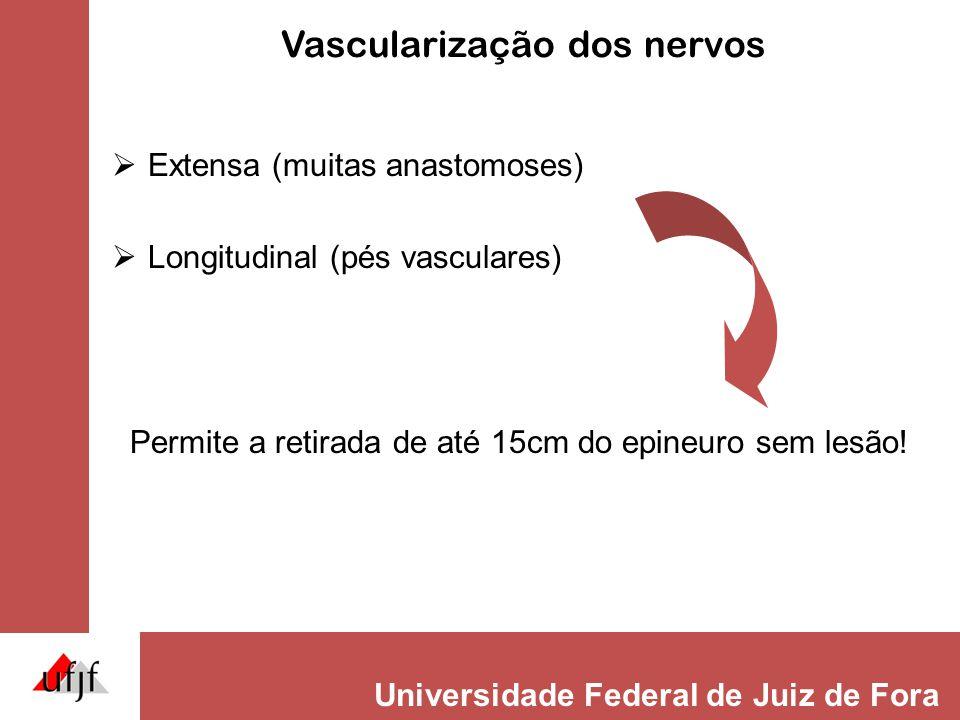 Vascularização dos nervos
