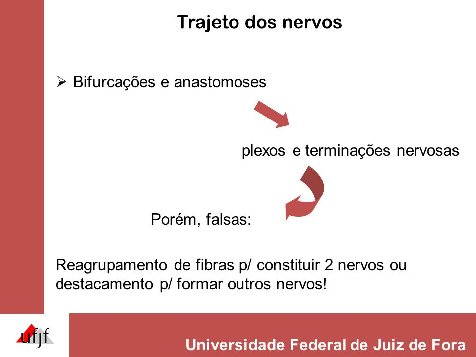 Trajeto dos nervos Bifurcações e anastomoses