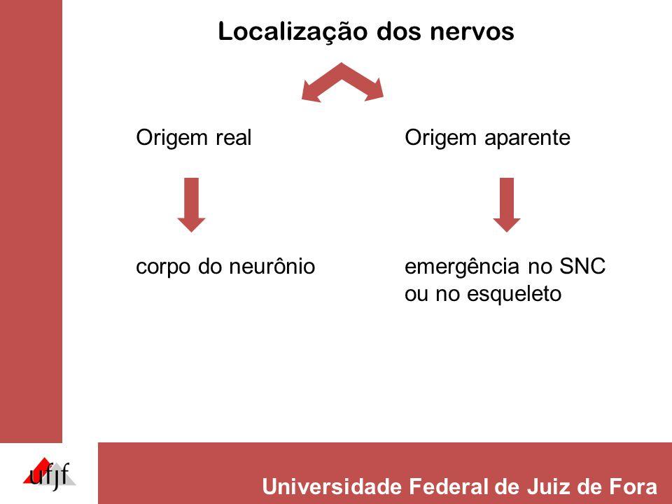 Localização dos nervos