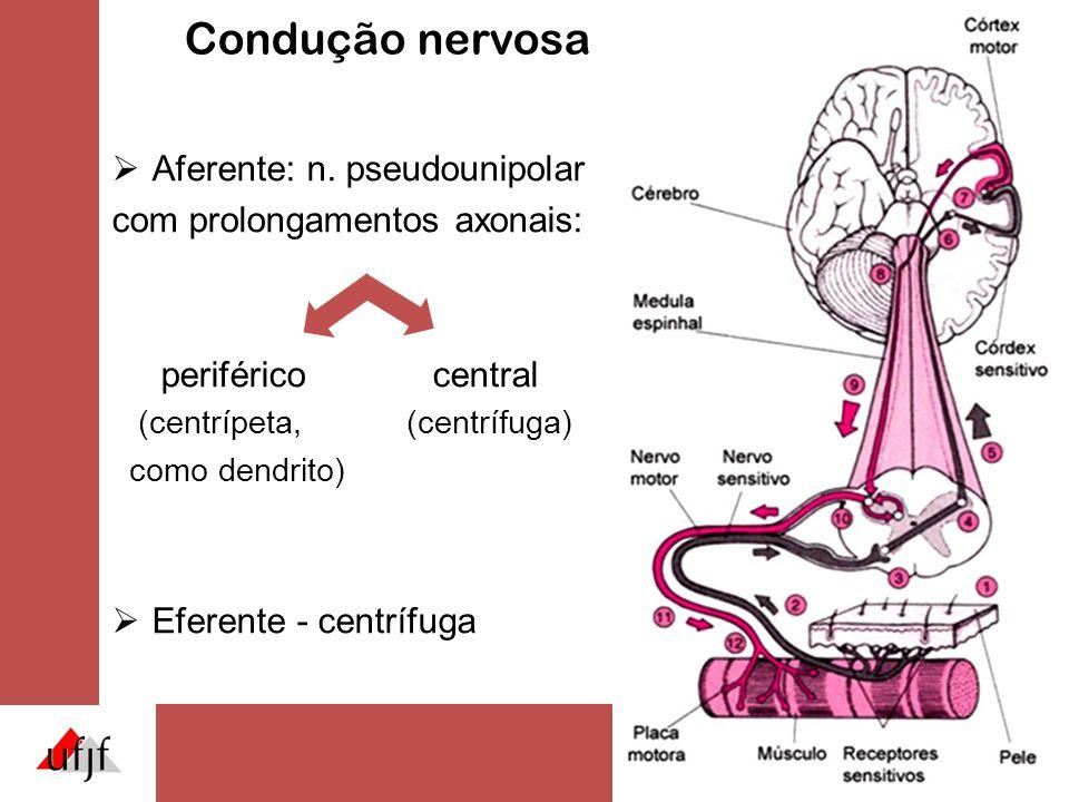 Condução nervosa Aferente: n. pseudounipolar