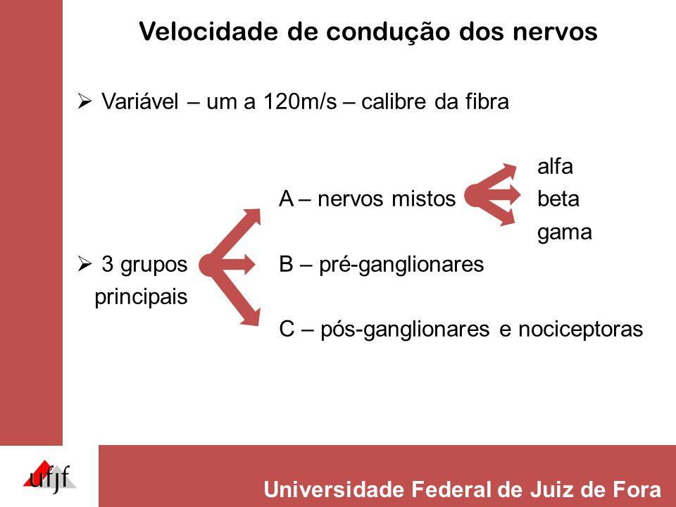 Velocidade de condução dos nervos