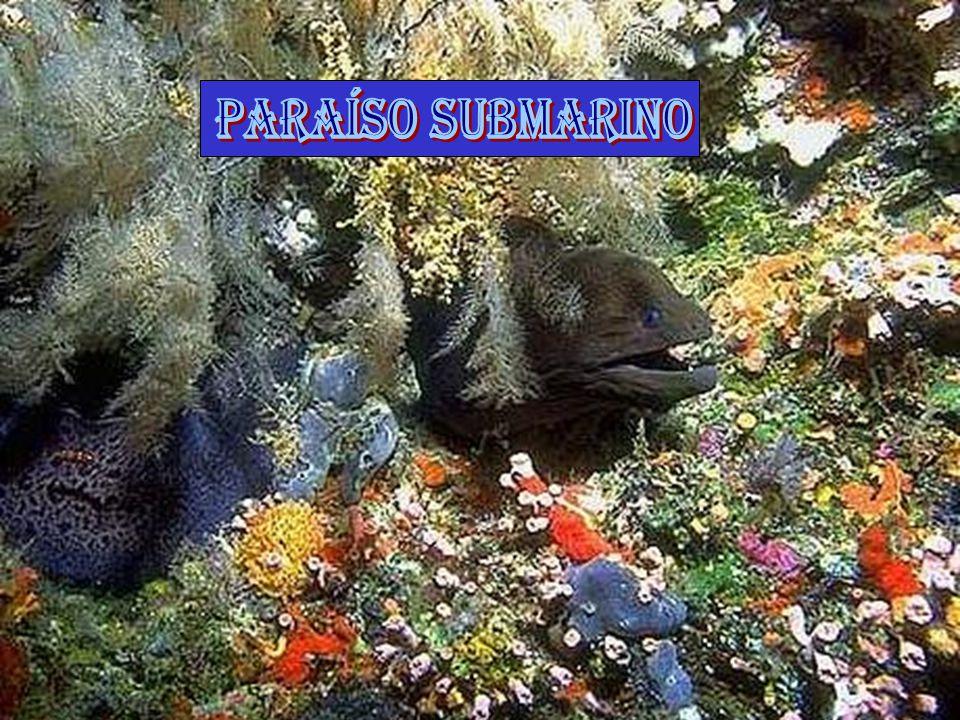 PARAÍSO SUBMARINO