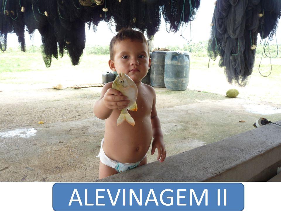 ALEVINAGEM II