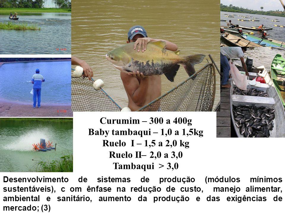 Curumim – 300 a 400g Baby tambaqui – 1,0 a 1,5kg