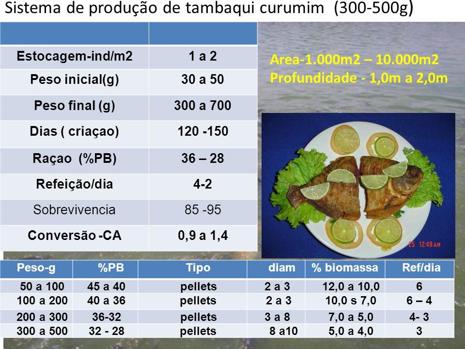 Sistema de produção de tambaqui curumim (300-500g)
